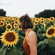 walk through fields of sunflowers