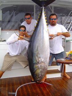 """Fishing for """"Big"""" #Yellowfin #Tuna in Costa Rica - this ones over 200lbs - http://fishcostarica.com"""
