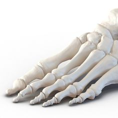 female skeleton human skull 3d model Foot Skeleton, Female Skeleton, Skeleton Model, Human Skeleton, Human Skull, 3d Anatomy Model, Human Hand Bones, Arm Bones, Female Torso