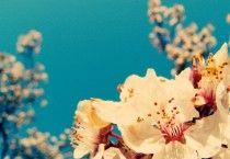 Vintage Flowers Wallpaper Picture