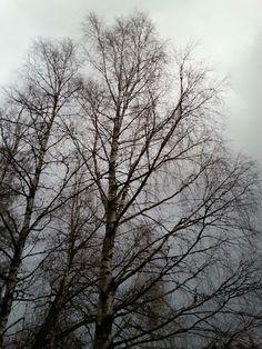 Nov9 , 2017 . The Moist and Cloudy Day in NURMIJÄRVI  . FINLAND  .