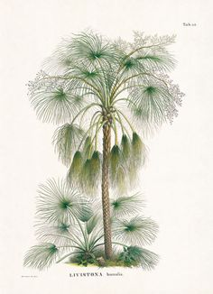 the book of palms / taschen