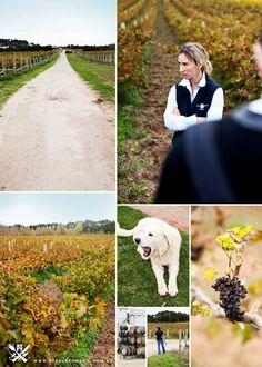 "Limestone Coast Regional Tour - South Australia {""Cape Jaffa Wines"" fully certified Biodynamic Vineyard in SA}"