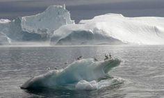 Como las algas pueden empeorar el calentamiento global