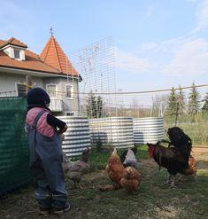 dasBierGartenHuhn – das Bier Garten Huhn