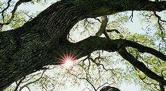 #tree of life movie