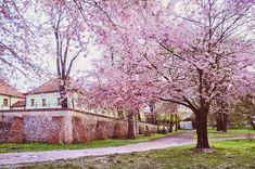 Jenny Rainbow Fine Art Photography Photograph - Tender Spring In Brno by Jenny Rainbow