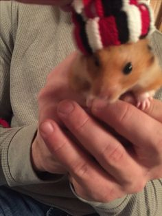 Hand made hats for my cute hamster! actually it was gift tag made by one of my cheer moms