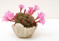 bonsai de cactus - Buscar con Google
