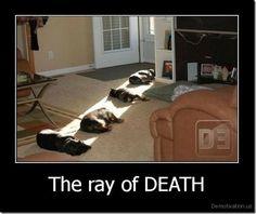 Hahahahaha! Must love dogs :)