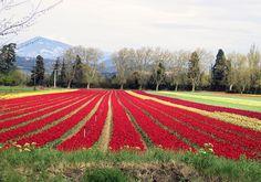 April in Provence (2)