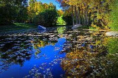 Title  On Golden Pond - Fine Art By Lynn Bauer  Artist  Lynn Bauer  Medium  Photograph - Photography/digital Art
