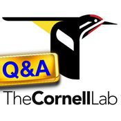 The Cornell Lab Q iPhone app - This looks like a good app for introductory birders w- bird quizzes.
