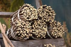 9 Reasons to Eat Licorice Root