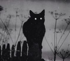 Beautiful black cat with light shinning in his eyes. NOT evil