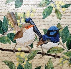 The Aussie's Fairy Wrens - another one.  I love these blocks.