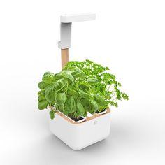 Unser neuster Mini Home Garden - Botaneo Eylo Mini Paprika, Planter Pots, Home And Garden, Herbs, Gardening, Food Ideas, Shop, Water Tank, Harvest