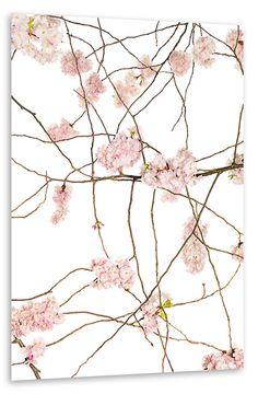 JAPAN KIRSCH POSTER - Rose Quartz & Serenity https://www.artboxone.de/japan-kirsch-poster.html