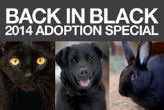 Pets in black often wait longer to get adopted. That's why Best Friends launched Back in Black, a national adoption campaign dedicated to increasing awareness and adoptions of black cats and dogs.  For the month of May, Back in Black special-rate adoptions will be offered at Best Friends Animal Sanctuary, Best Friends Pet Adoption Center in Salt Lake City, and participating Network rescue partners and coalition members around the country. #BIB #SaveThemAll