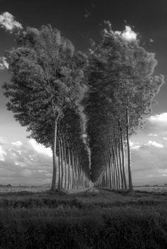 BROKEN HART by Riccardo Alù on 500px #trees