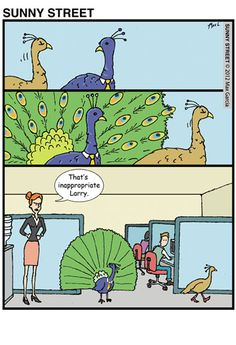 Inappropriate peacock