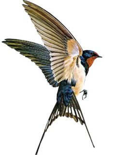 17 New Ideas For Swallow Bird Drawing Wings Bird Drawings, Animal Drawings, Drawing Animals, Swallow Bird Tattoos, Tattoo Bird, Swallow Tattoo Design, Barn Swallow Tattoo, Tattoo Forearm, Golondrinas Tattoo