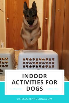 Dog's need exercise even when they can't go outside. Here are 24 games to play with your dog inside. Dog Activities, Indoor Activities, Dog Games, Games To Play, Toy Puppies, Puppy Care, Dog Care Tips, Pet Mat, Pet Carriers