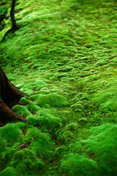 Green | Grün | Verde | Grøn | Groen | 緑 | Emerald | Colour | Texture | Style | Form | Pattern | Moss Covered Ground