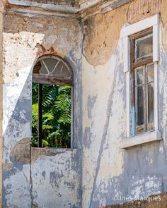 Nature conquering what Men once built. Passage of time. Old building ruins. Wall decor. House decor. Architecture print. Architectural Prints, Old Building, Digital Photography, Wall Prints, Mother Nature, Wall Art Decor, Digital Prints, Windows, Architecture