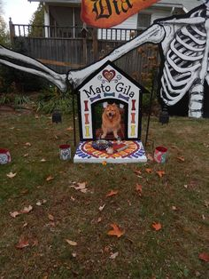 Halloween 2016.  Alter for my dog that passed this year.  The alter included her favorite food: hot dogs, her favorite toy: paper towel tubes, her Halloween collar, and lots of tog treats.