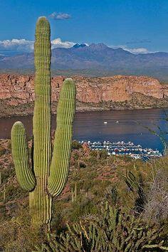 A fat saguaro above Saguaro Lake marina with Four Peaks in the background, Tonto National Forest, Arizona