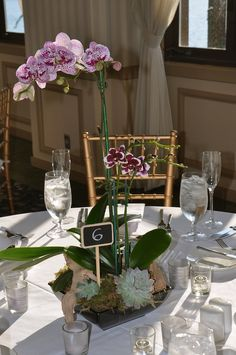Potted Orchid plants are highlighted at the base with grape wood and potted #succulents for a unique wedding reception #centerpiece. #FinishWithFlowers