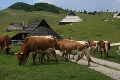 Magic meadow village of Velika Planina 90 Euro
