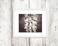 Foxglove Photograph Black and White Photography Fine Art Photo Home Wall Decor Flowers Floral Nature Garden Country Moody Spring by ShutterTreePhotos on Etsy
