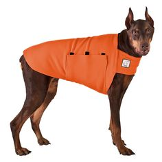 Orange Doberman Pinscher Dog Tummy Warmer, great for warmth, anxiety and laying with our dog rain coat. High performance material. Made in the USA.
