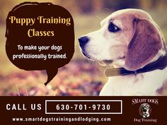 10 Best Dogs Training Images On Pinterest Perros Y Cachorros