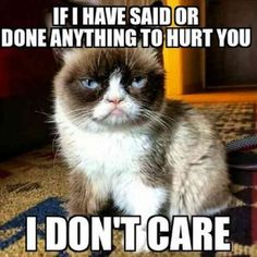20 Seriously Funny Grumpy Cat Memes - Grumpy Cat - Ideas of Grumpy Cat - 20 Seriously Funny Grumpy Cat Memes The post 20 Seriously Funny Grumpy Cat Memes appeared first on Cat Gig. Grumpy Cat Quotes, Funny Grumpy Cat Memes, Cat Jokes, Funny Animal Memes, Funny Animal Pictures, Funny Cats, Funny Animals, Funny Memes, Grumpy Cats