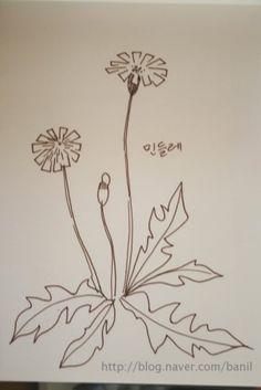 Dandelion. jwt