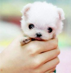 A fist full of puppy