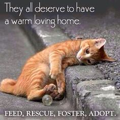 Please adopt. Please be their voice. Please help me save the Animals