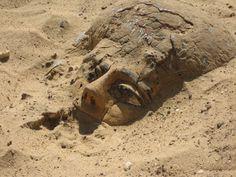 http://www.imamuseum.org/blog/wp-content/uploads/2013/10/ima_egypt_fig1_101513.jpg