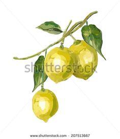 Lemon by svemar, via Shutterstock