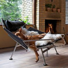 Pet Care: Caring for Dogs in Cooler Weather. Ensure your furry companion stays safe and warm in the cooler seasons ahead. #pets #petcare #dogs