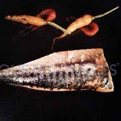 Xarda o caballa ligeramente asada, con un toque picante   Restaurante Alborada en A Coruña