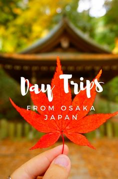 For those keen on exploring more of Japan, the following are two great day trips from Osaka, fantastic for culture and natural attractions.
