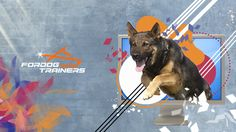 Every Dog Breed, German Shepherds, Wallpaper S, Dog Owners, Dog Breeds, Your Pet, Collars, Have Fun, Desktop
