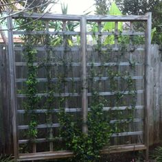 Trellis by fence... a silmple and inexpensive solution