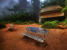 WWII san francisco - Marin Headlands - Misty forest
