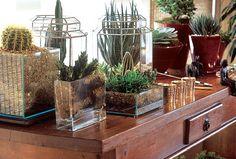 Como deixar seu jardim perfeito ...: Plantas Protetoras   Cactos e Suculentas estão na lista...