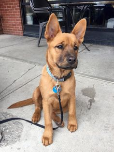 This little guy looks like a young Scooby-Doo http://ift.tt/2mf6niS